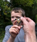 A young visitor helps release a tagged Monarch butterfly at Falls Lake.