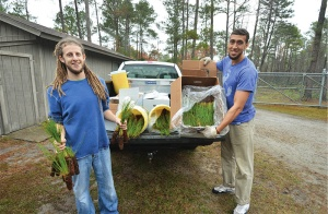 Volunteers planted 1,670 longleaf pine seedlings on a day at the state park.