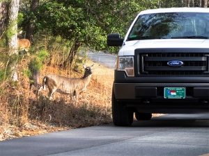 Many of the captured animals were found close to park roads and campgrounds.