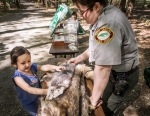Ranger Erica Tunison helps a youngster explore animal pelts.