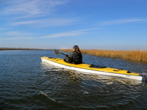 Hammocks Beach has paddle trails through extensive marsh.