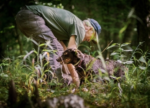 Rucker and Boykin spaniels search for turtles in heavy brush,