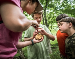 Naturalist Kat Walston gets help measuring box turtle for study sponsored by the Eno River Association