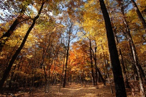 Fall color hits the trail at Raven Rock State Park.