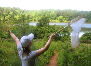 NCSU graduate student April Hamblin gathers native bees at William B. Umstead State Park.