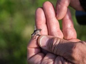 A katydid found by former park ranger Floyd Williams.