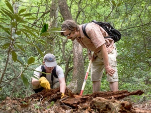 Students from Appalachian State University dig into a decayed log.