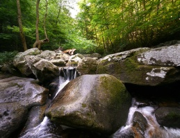 Streams on the newly acquired property feed the pristine Jacob Fork River in the state park.