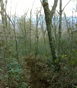 Before mulching, the ridge had a tangle of underbrush and leaf litter.