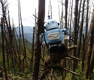 The fate of high-elevation trees is an important topic for investigation.