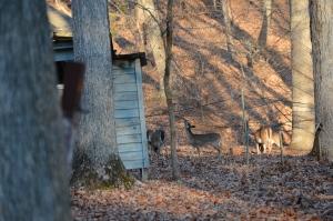 Deer under net
