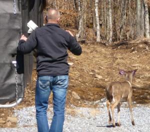 Release of deer