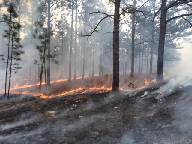 CACR burn photo